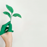 main tenant une plante pour illustrer le greenwashing